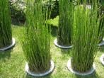 Bamboo arrangements in Singapore