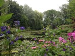 Pond at Giverny, France