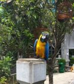 Parrot at Hong Kong bird market