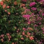 Umaid Bhawan Palace hotels garden